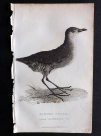 Cuvier C1830 Antique Bird Print. Banded Crake